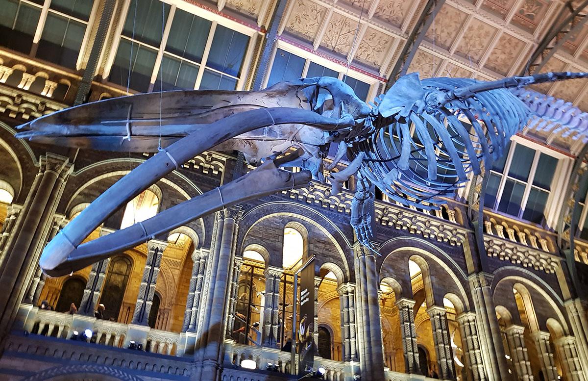 10 Ausflugstipps für London mit Kindern dinosaurier