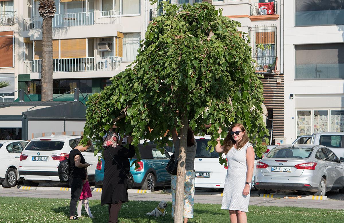 10-Dinge-die-man-unbedingt-in-Izmir-machen-muss-wunschbaum