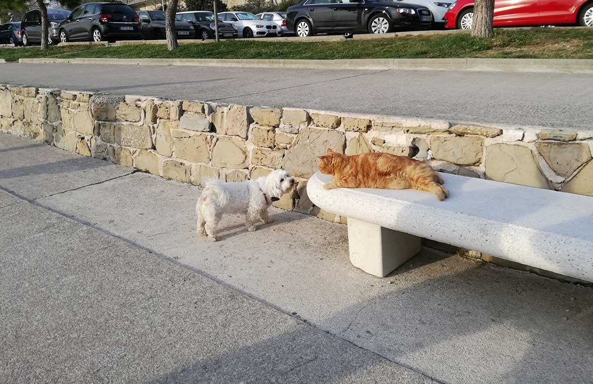 LIFECLASS-Portoroz-Hotel-Slovenia-hund-und-katze
