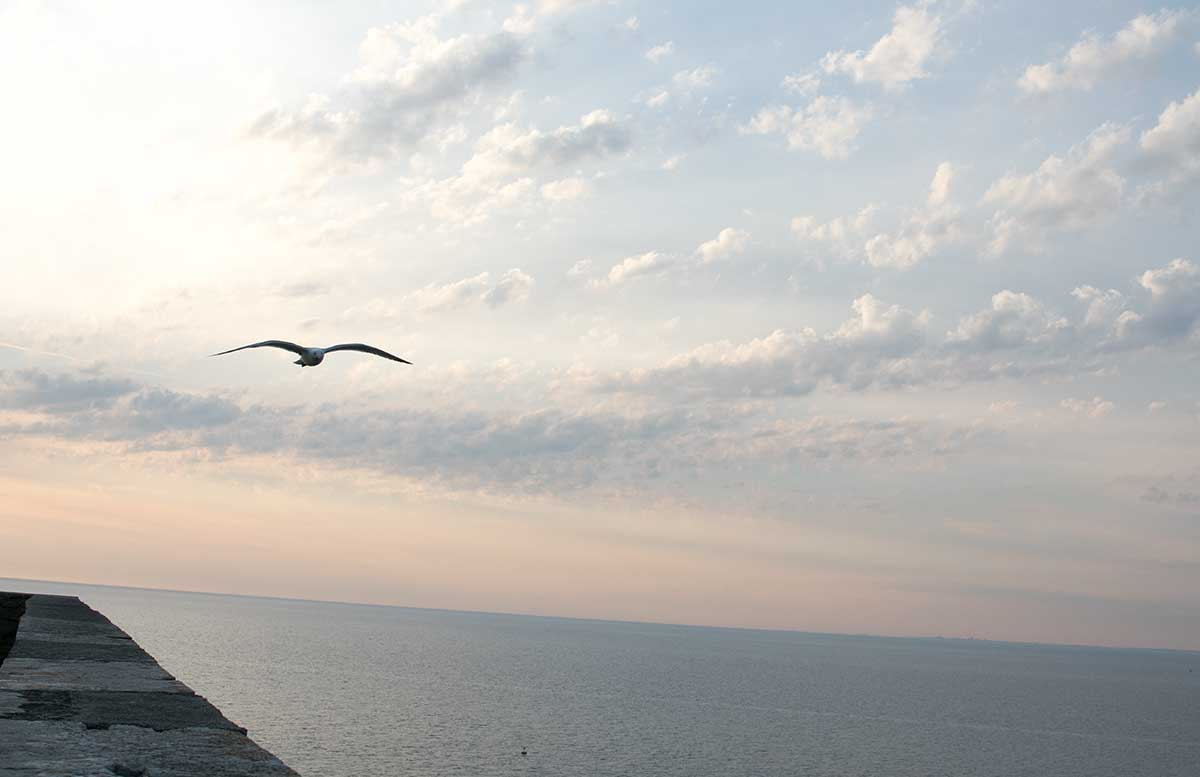 Ausflug-zum-Meer-Portorož-und-die-Altstadt-in-Piran-möwe-über-meer