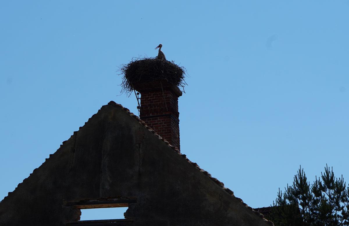 Ausflugsziele-für-Familien-in-Südmähren-storch