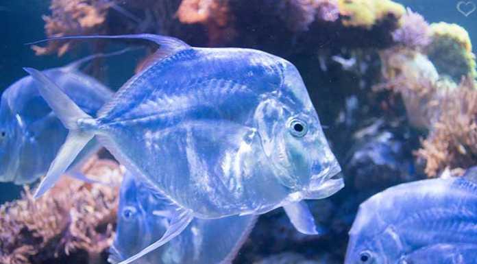 City-Trip-nach-Salzburg-ins-Haus-der-Natur-fisch-aquarium