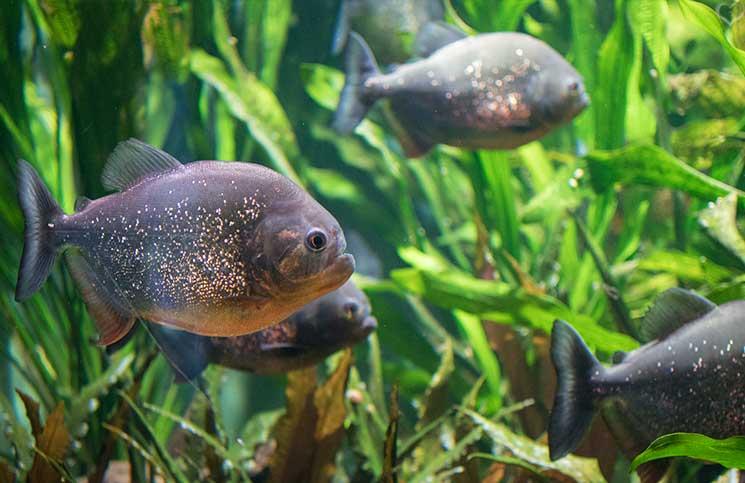 City-Trip-nach-Salzburg-ins-Haus-der-Natur-fische-im-aquarium