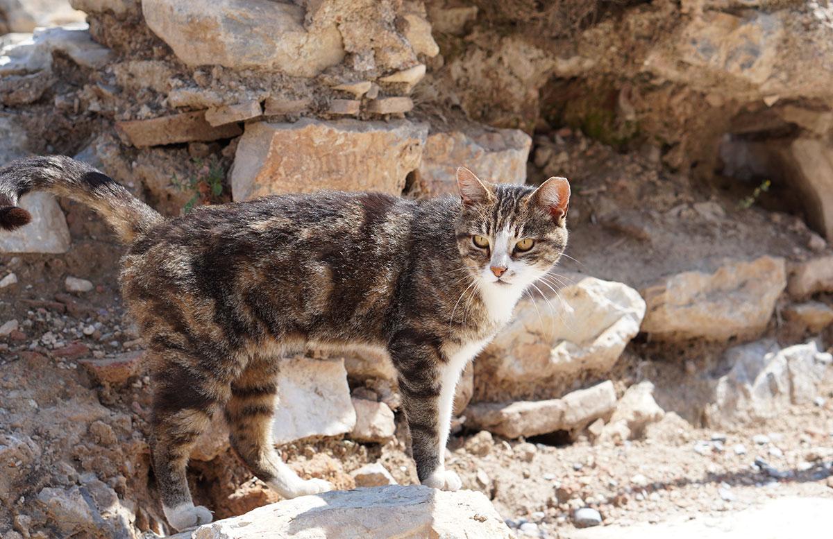 Die Ruinen von Ephesos orangenbäume katze