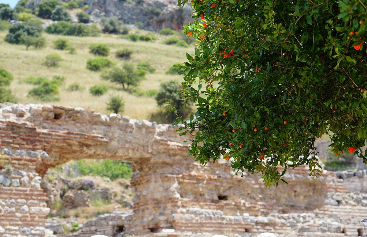 Die Ruinen von Ephesos orangenbäume