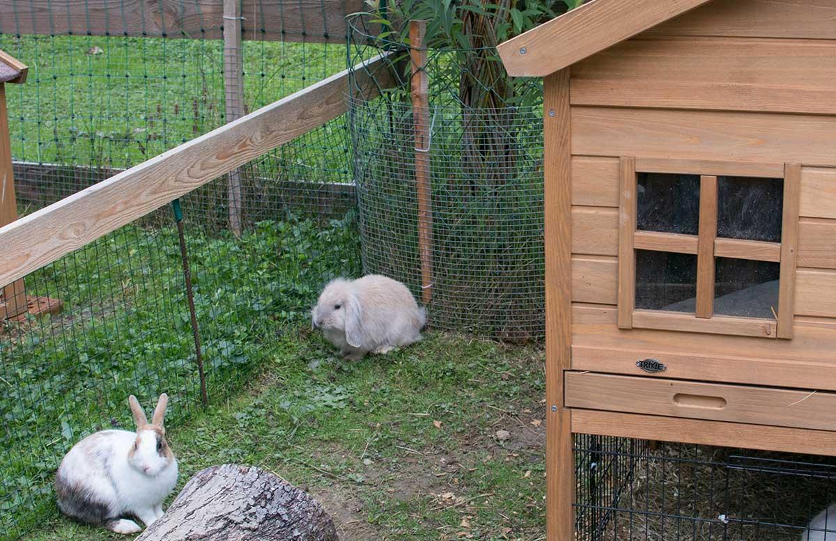 Die Straußenfarm am Lindenhof in Auffen hasen streicheln meerschweinchen häschen