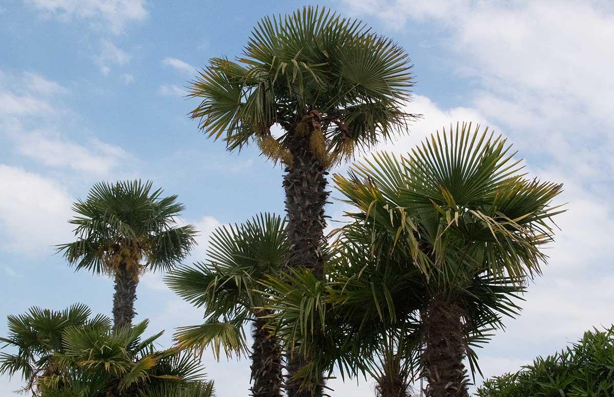 Europa Camping Village Cavallino Venezia viel grün palmen