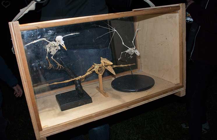 Ausflug zum Bauernhof und Fledermaussuche-fledermaus-skelett