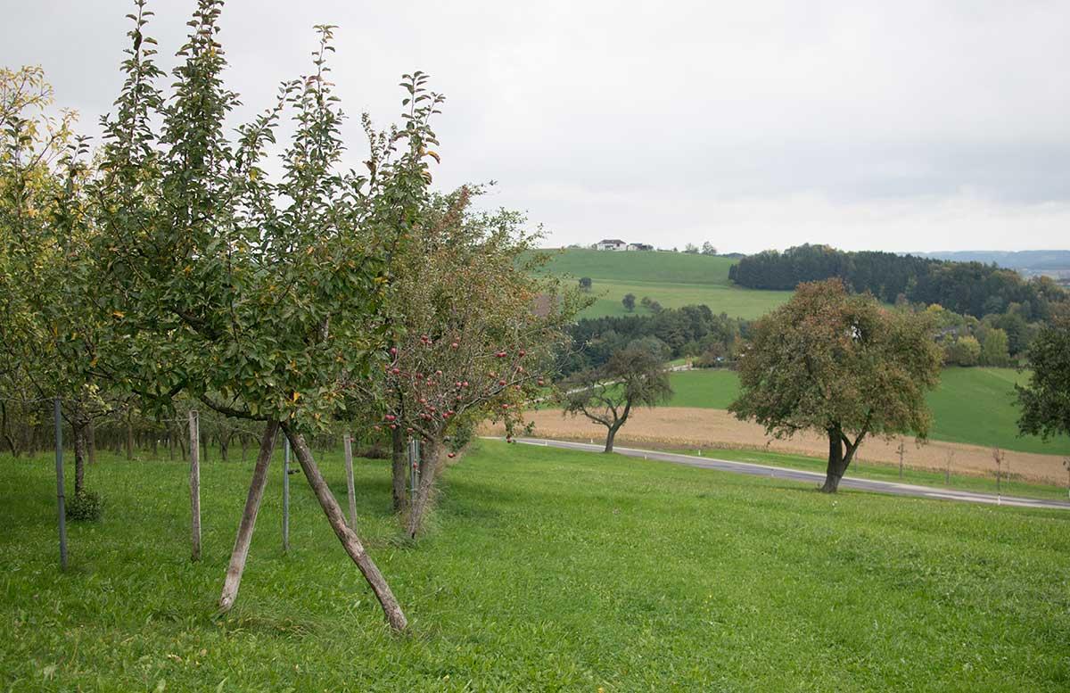Genussreise ins Mostviertel - Von Birnenmost und Apfelsenf bäume