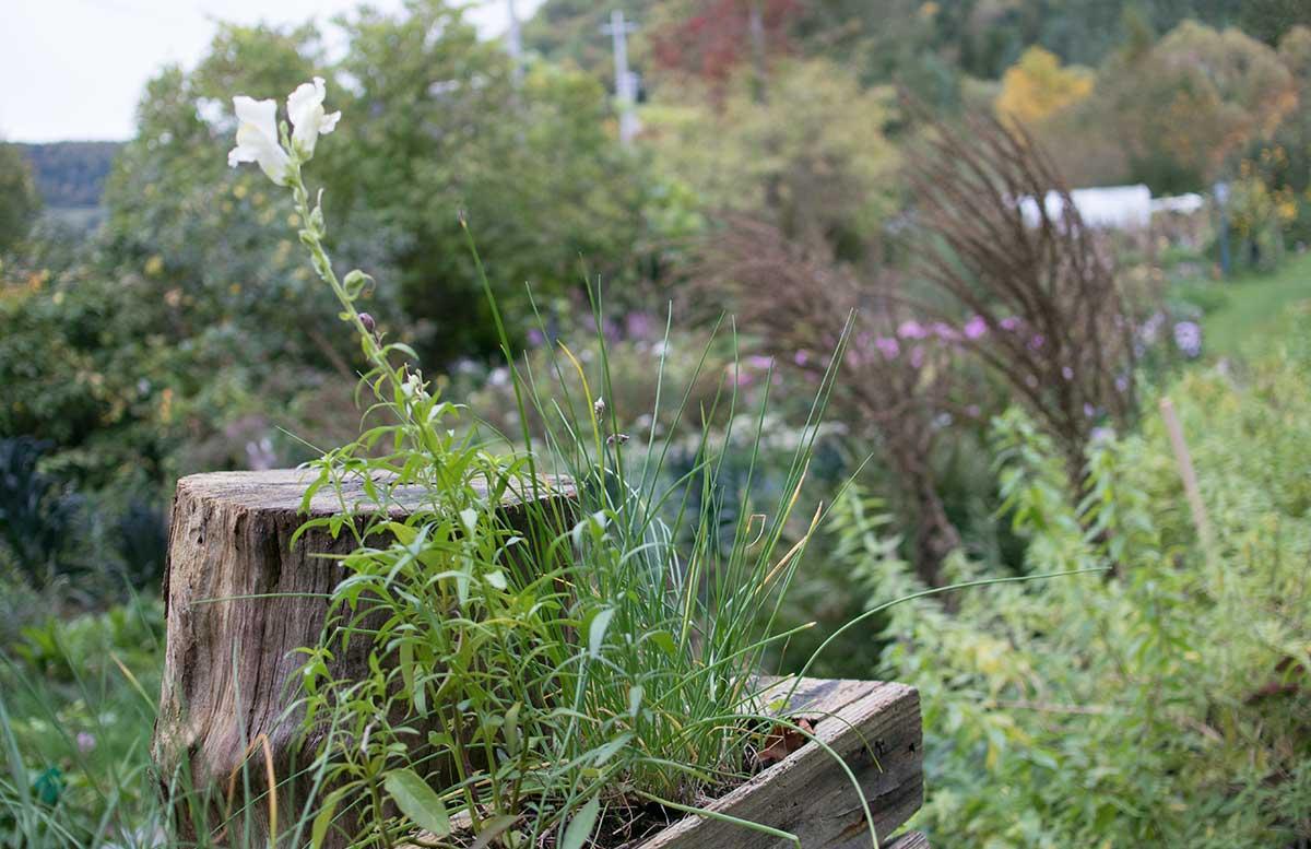 Genussreise ins Mostviertel - Von Dirndln und Heilkräutern naturgarten