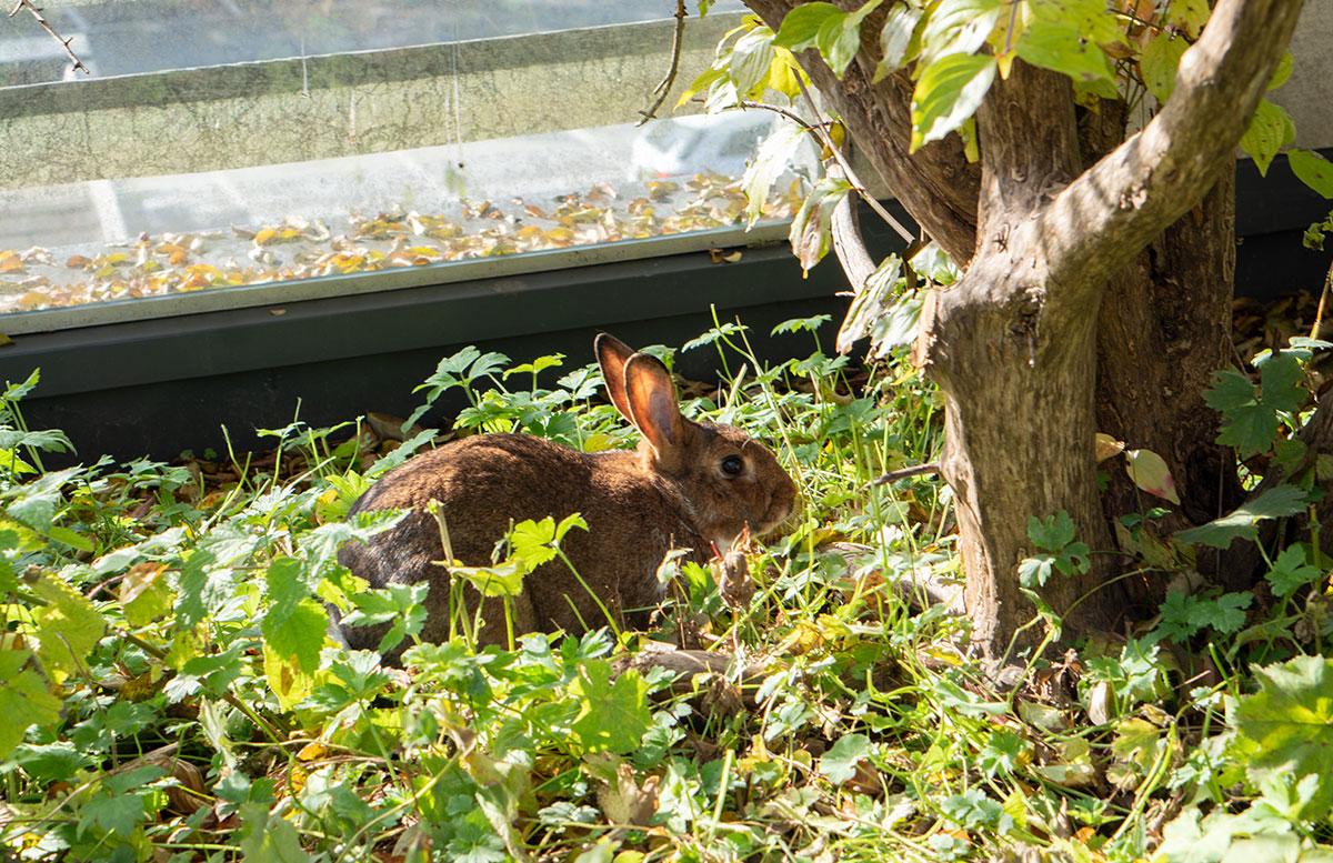 Herbstferien-im-Hotel-Oberforsthof-in-St.-Johann-hase