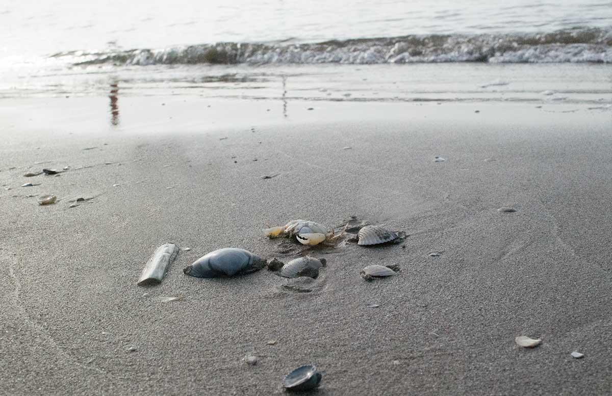 Sonnenschutz für die ganze Familie sonnenpflege produkte familie am strand