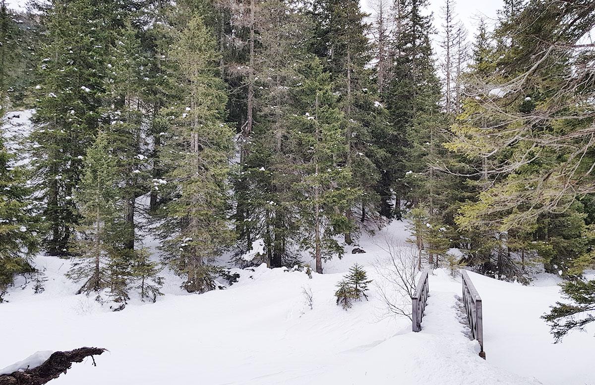 Schneeschuhwanderung zum Obernberger See wandern see verschneit