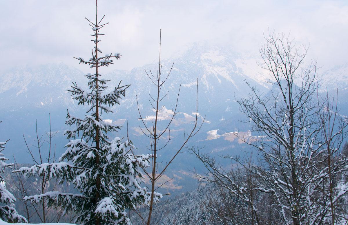 Skifahren im Salzburger Saalachtal im Familien-Skigebiet Lofer bäume berg