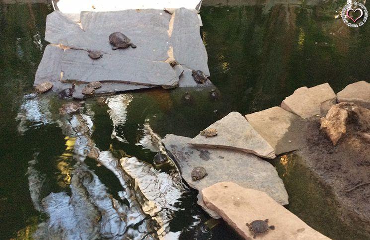 bahnhof-atocha-schildkröten