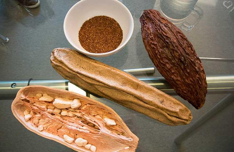 kakaobohnen-esse