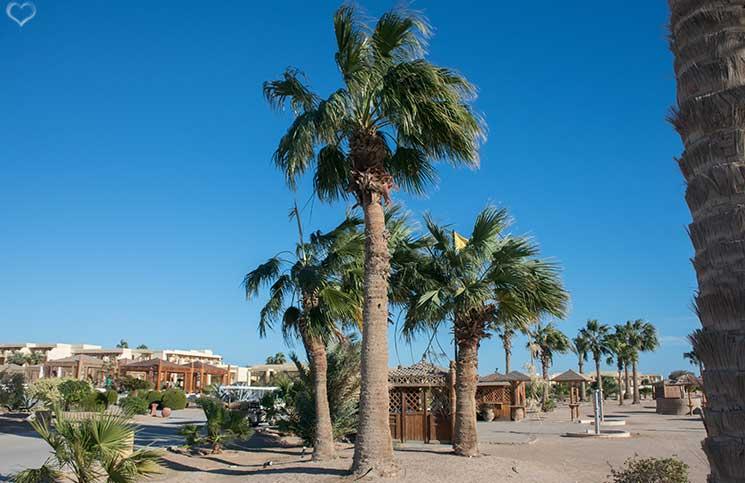 palmen-sheradon-luxus-hotels