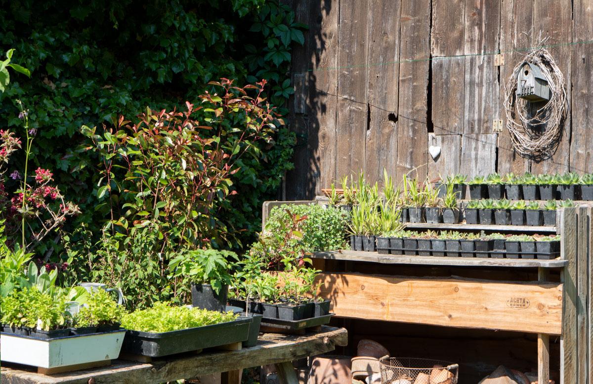parks-und-gärten-in-niederösterreich-und-südmähren-pflanzen-bauerngarten parbus