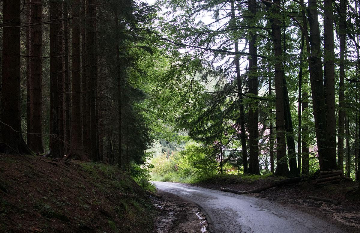 wandern-am-grünberg-in-gmunden