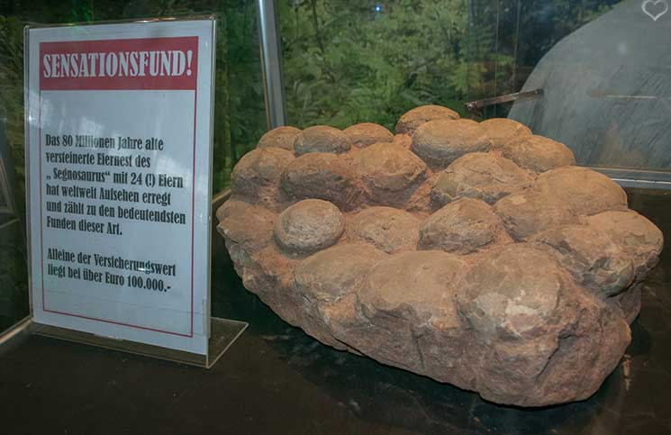 world-of-dinosaurs-versteinerte-eier